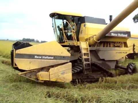 cortando arroz