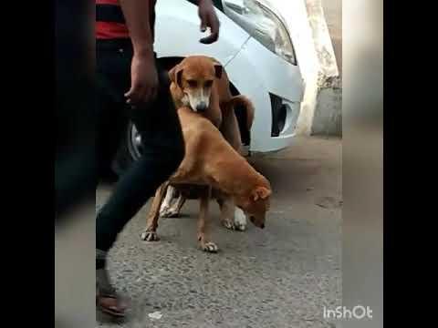 Dhom machale dog fuck