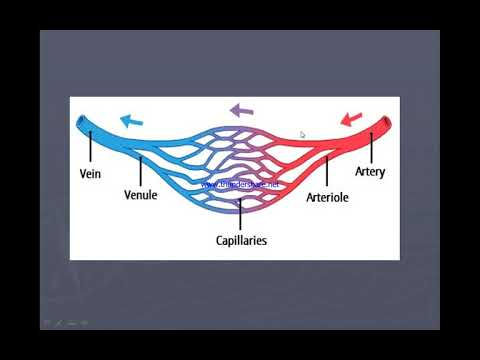 Xxx Mp4 شرح مبسط للدورة الدموية Blood Circulation System 3gp Sex