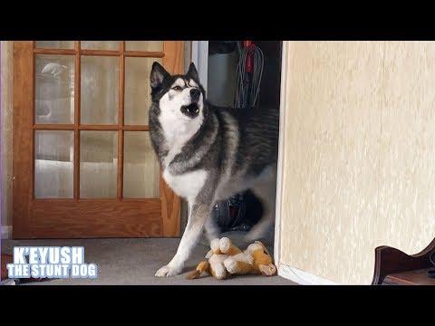 Xxx Mp4 Husky Came Husky SANG Husky Left Dramatic Dog 3gp Sex