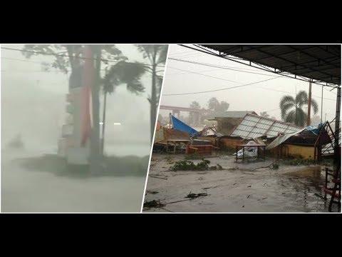 Detik-detik Hujan Badai dan Petir Tumbangkan Pohon Besar di Pekanbaru