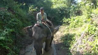 Myanmar - Elefanti a Taungoo