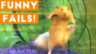Funniest Animal Fails January 2018 Compilation | Funny Pet Videos