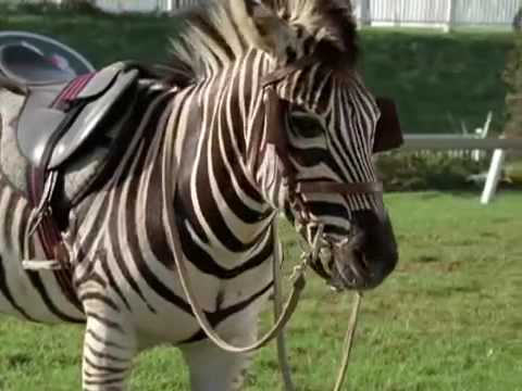 Spread Your Wings: Racing Stripes