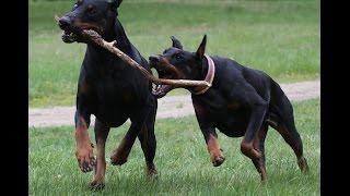 Физические нагрузки для собак / Ann Di Pets