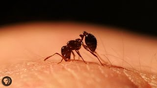 Inside the World of Fire Ants! 🔥🔥🐜🔥🔥