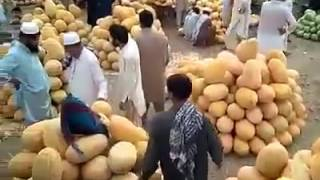 World Big...Big...Biggest Mango Market