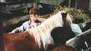 The Red Pony - (Original Trailer) mit Peter Miles - 1949