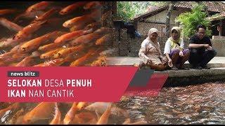 Selokan Desa Penuh Ikan Nan Cantik