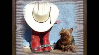 Sunny Cowgirls -- 6 Pack Short