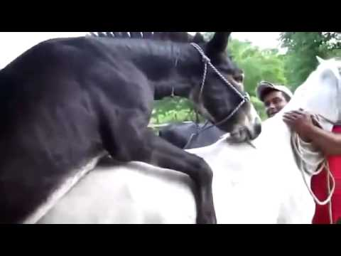 Xxx Mp4 Mating Animals Funny Video Reproducing Donkey Mating With Horse 3gp Sex