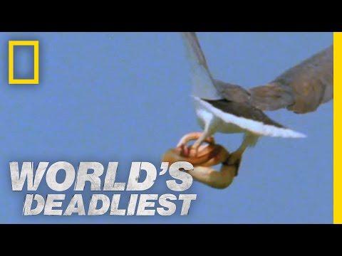Eagle vs. Toxic Snake | World's Deadliest