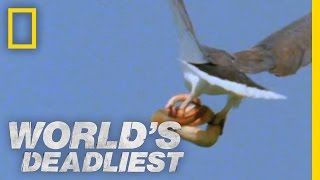 Eagle vs. Toxic Snake | World's Deadliest