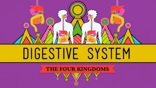 The Digestive System: CrashCourse Biology #28