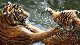 20 Craziest Animals Real Fight Caught On Camera | Most Amazing Big Battle Animals
