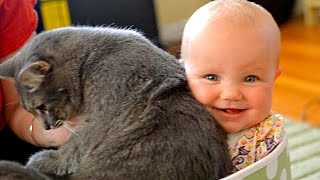 Babies Laughing Hysterically at Cats Compilation NEW