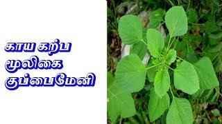 காய கற்ப மூலிகை குப்பைமேனி  - Sattaimuni Nathar - Siththarkal - Sithargal - Sithar