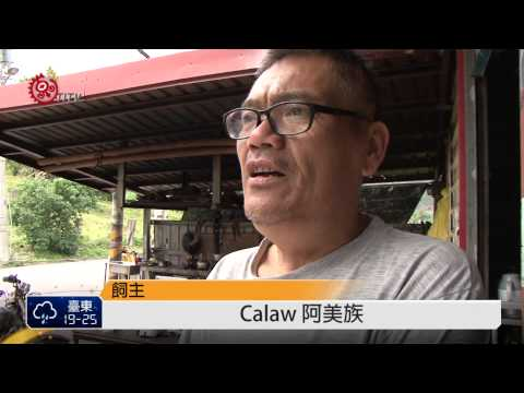 Kiwit民祖傳妙招 訓練家狗不追車 2015-03-08 TITV 原視新聞