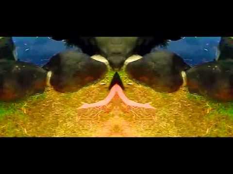 Amejing video