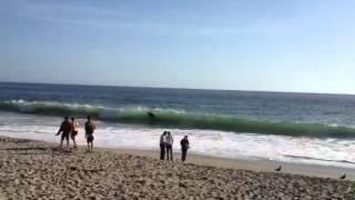 نهنگ در ساحل كاليفرنيا