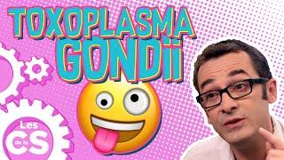Toxoplasma Gondii: le parasite qui pousse à faire des trucs dingues - Les chroniques de la science