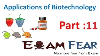 Biology Biotechnology Applications part 11 (Transgenic Animals) class 12 XII