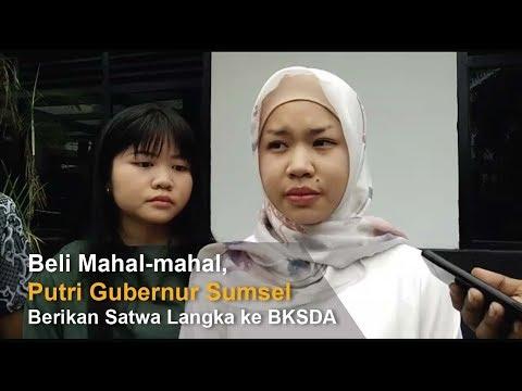 Xxx Mp4 Beli Mahal Mahal Putri Gubernur Sumsel Berikan Satwa Langka Ke BKSDA 3gp Sex