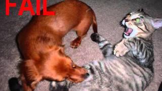 Fresno Street - Gatos, perros  y tangas de Toni