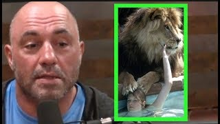 Joe Rogan - Melanie Griffith Had a Pet Lion