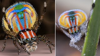 Most BEAUTIFUL Animals in the World