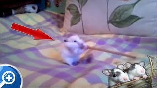 ➽ Videos de risa de animales chistosos y locos 2015 (HD)