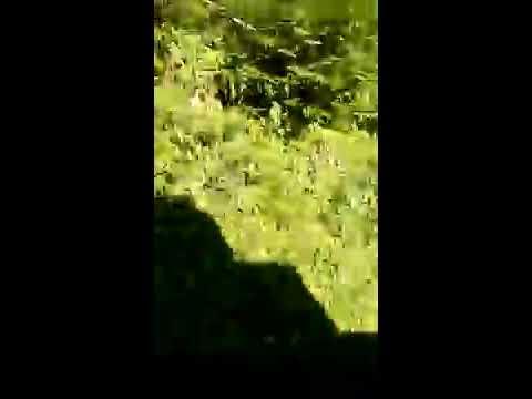 Xxx Mp4 Napali 3x Video Na Dakle Miss Korban 3gp Sex
