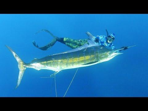 Pesca Submarina una enorme Marlin Negro con Tim McDonald Historia completa Engllish Audio