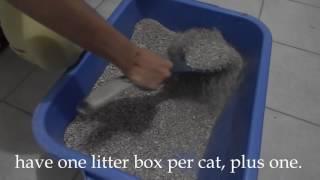 cat spraying no more pdf