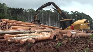 Tigercat: Committed to Forestry
