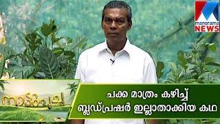 Farmer reduce blood pressure with Jackfruit - Nattupacha   Manorama News