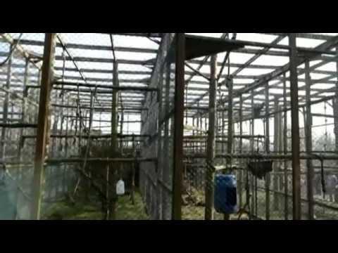 Xxx Mp4 Twycross Zoo Movie 3gp Sex