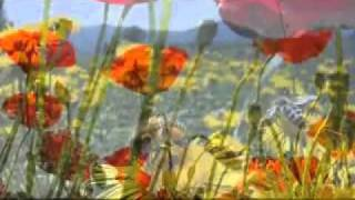 turkish instrumental music - türk enstrümantal müzik -                  - YouTube.flv