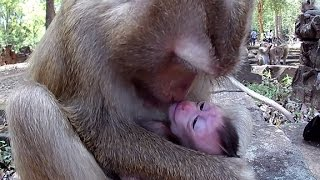 🙈Newborn baby monkey with young mother😚