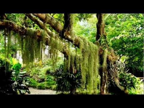 大自然音樂 Nature music 晨歌 森林狂想曲 Morning song forest Rhapsody