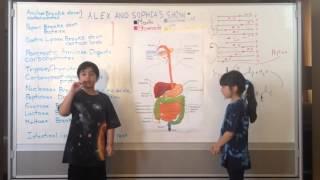 Digestive system (The Science Kids Biology #1)