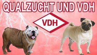 VDH und Qualzuchten / Informationsvideo zum Thema Qualzucht
