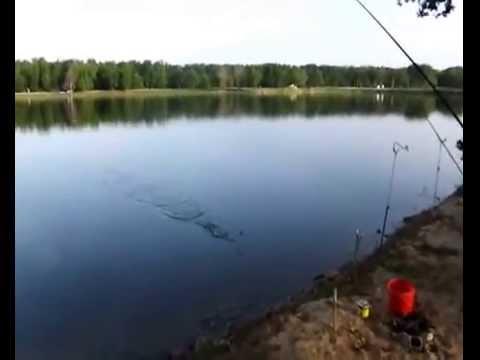 рыбалка на большом гоке ставропольского края