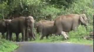 elephant in valparai jungle