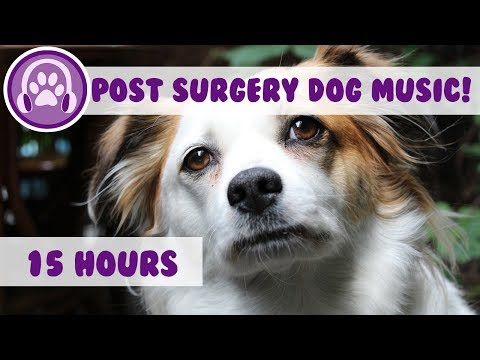 Xxx Mp4 Relaxing Music To Calm Dogs Post Surgery Soothing Melodies To Help Recovery 2018 3gp Sex