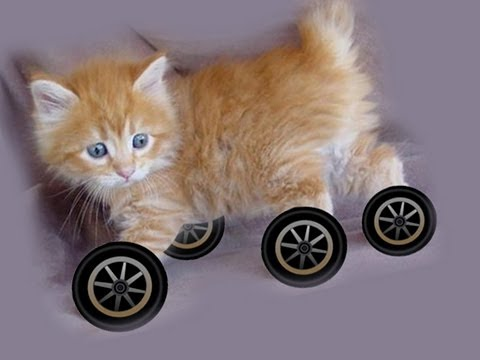 Why Don t Any Animals Have Wheels