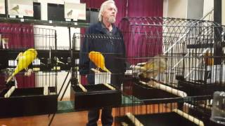 Yorkshire Canary club Melbourne annual show 2016