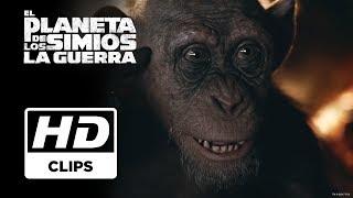 El Planeta de los simios: La Guerra | Clip Simio Malo doblado | Próximamente - Solo en cines