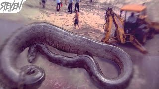 Serpientes Más Grandes del Mundo | TOP 10