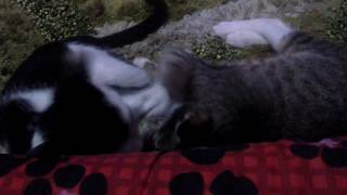 Pussy Play wrestling